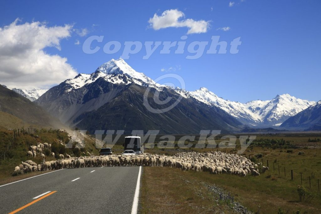 OfSheep and Mountains II