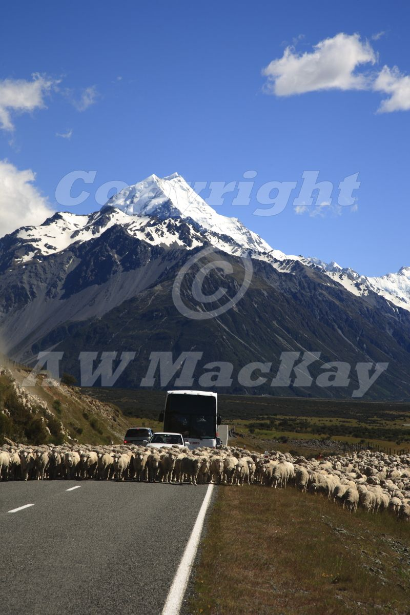 Of Sheep and Mountains I
